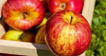 hedelma_omena